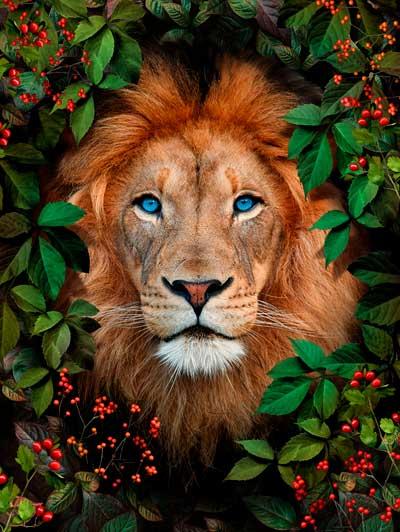 Quadro Leão na Floresta