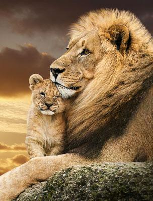 Quadro Leão Amor Paterno