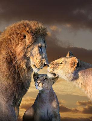 Quadro Leão em Família