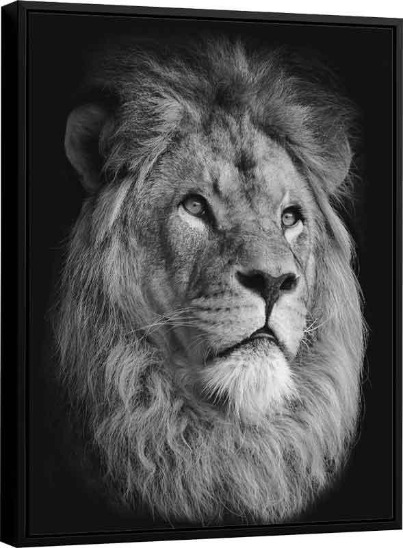 Quadro Face do Leão