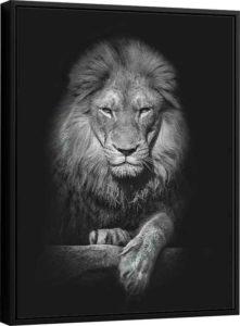 Quadro Leão no Preto