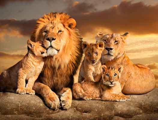 Quadro A Linhagem do Leão