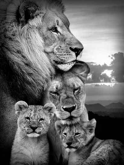 Quadro Família de Leões