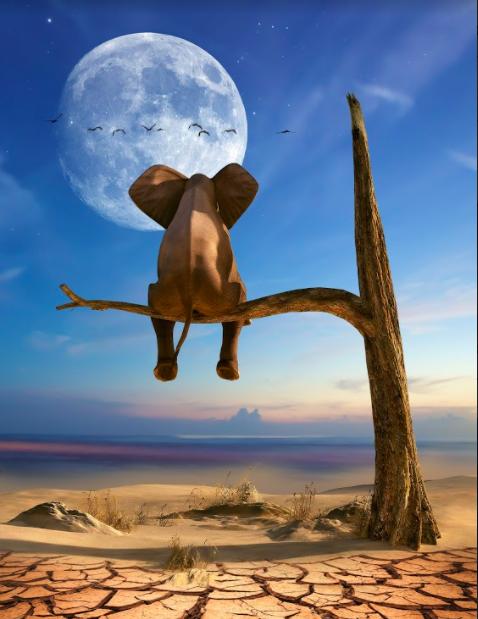 Quadro Elefante Mariano