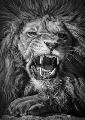 Quadro Presas de Leão