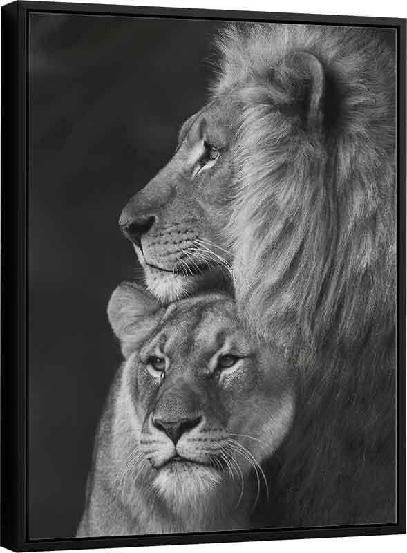 Quadro Casal de Leões