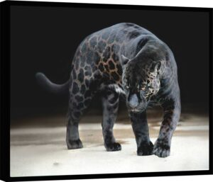 Quadro Black Jaguar