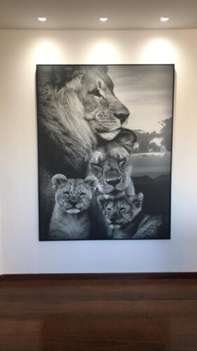 Quadro Família de Leões photo review